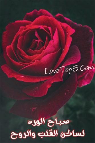 ورود الحب أحلى صور الورد مع أعذب الكلمات الرومانسية موسوعة الحب والرومانسية