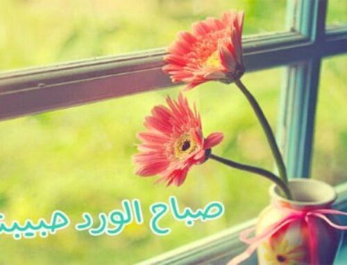 صباح الورد حبيبتي أجمل الصور و التصبيحات الرومانسية