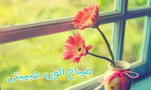 صباح الورد حبيبتي