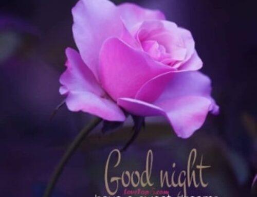 مساء الورد والحب أحلى مساء بأجمل الكلمات